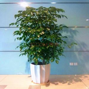 园林木本植物分类