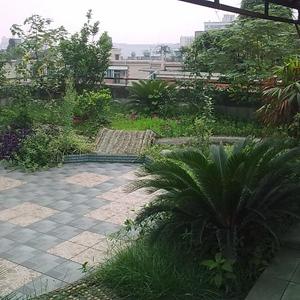 屋顶花园植物配置