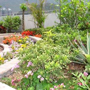 庭院绿化设计_庭院围栏设计_郑州庭院景观绿化