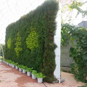 绿墙设计_成都市绿江南园林绿化有限公司